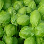 Basil Gustosa - Genovese Type - 1000 seeds